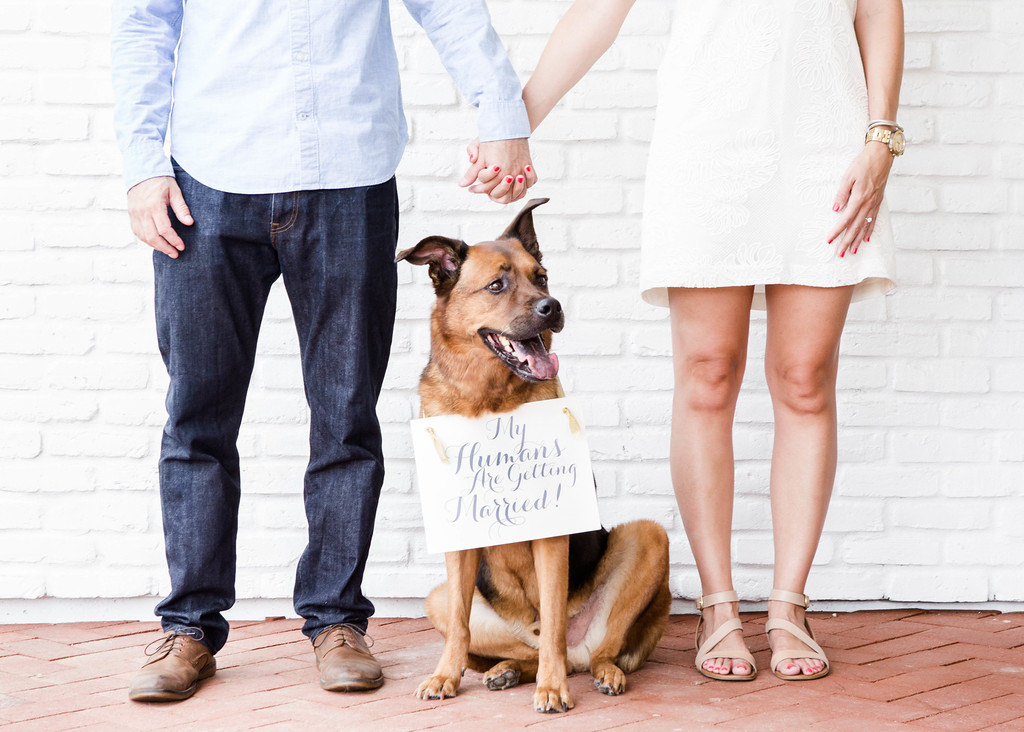 Incorporating Your Pup at Your Wedding   PreOwnedWeddingDresses.
