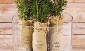 Fun Wedding Favors – Evergreen Tree Seedling